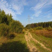 Когда иду я Подмосковьем IMG_0324 :: Андрей Лукьянов