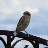Птиц. :: Oleg4618 Шутченко