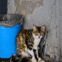 Ой, а фото это не больно?!-из серии кошки очарование моё! :: Shmual Hava Retro
