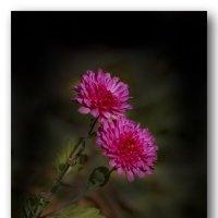 из жизни цветов :: gribushko грибушко Николай
