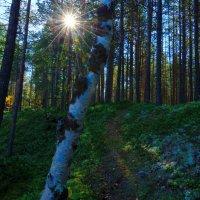 Утро в лесу :: Александр Кокоулин