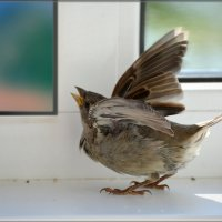 на волю!) :: linnud