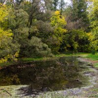 """Лесное озерцо в парке """"Дружба"""". Тамбов :: Виктор"""