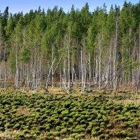 У леса :: Нэля Лысенко