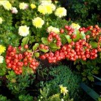Осенние ягоды :: Татьяна Пальчикова