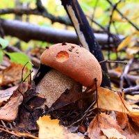 Лесной красавчик :: Татьяна Ломтева