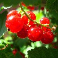 Красота в витаминах :: Стас Борискин (Stanisbor)