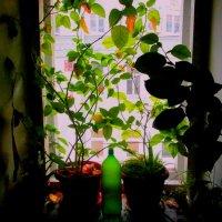 окно :: Василий Батурин