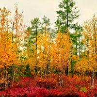 Цветная осень. :: Лариса Красноперова