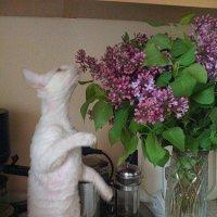 Любительница цветов :: Наталья Александрова