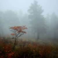 Осенний туман :: Сергей Брагин