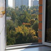 Осень из окна :: Василий Аникеев