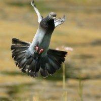 лечу к вам! :: linnud