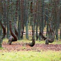 """""""Танцующий лес"""". :: Валерия Комова"""
