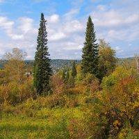 Природа в осеннем наряде :: Нина северянка