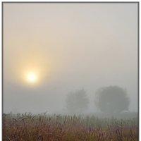 В тумане :: Максим Сорокин