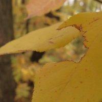 Осеннее макро :: Hard Distortion