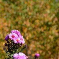 цветы :: Алексей Бортновский
