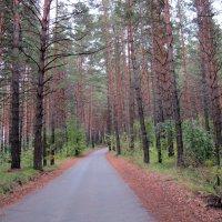 Вековой сибирский лес .Дороги. :: Мила Бовкун