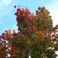 Осень :: Светлана Леденева