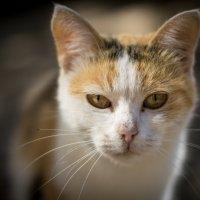 Кошка :: Anna Dubikovskaya
