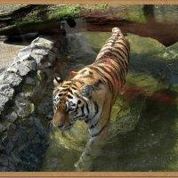 А я иду, шагаю по воде... :: muh5257