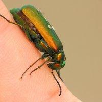 насекомое. :: Dorian Gray