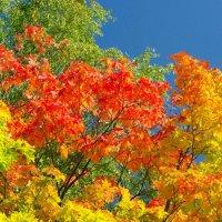 золотая осень :: Геннадий Хоркин