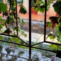 Про град и виноград... :: Елена Миронова