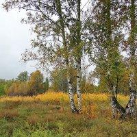 Осень. Пасмурное золото #3 :: Виктор Четошников