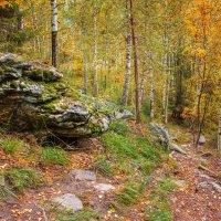 осенний лес :: Андрей Пашков