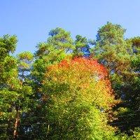 Дивная краса осени :: Андрей Снегерёв