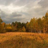 В багрец   и в золото одетые леса... :: Kassen Kussulbaev