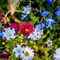 Цветы :: Артем