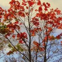 Осень разноцветная. :: Маргарита ( Марта ) Дрожжина