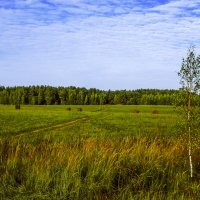 Во поле береза стояла... :: Михаил (Skipper A.M.)