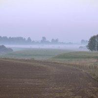 Туман осени :: Елена Панькина