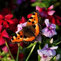 осенняя бабочка :: djangalina *