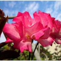 В осеннем небе... :: Тамара (st.tamara)