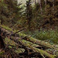 Утро в лесу :: Андрей Полозов