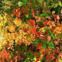 Осенние краски :: Николай Сапегин