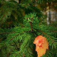 Внезапно в осень вкрался красный лист.. (с) :: Lady Etoile