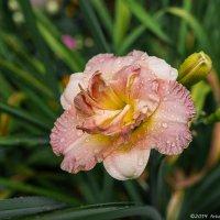 После дождя :: Надежда Лаптева