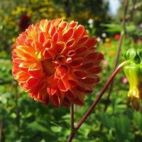 Осенние цветы. :: ТАТЬЯНА (tatik)