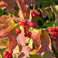 Осень :: Анна S