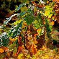 Осенних листьев вернисаж... :: Лесо-Вед (Баранов)