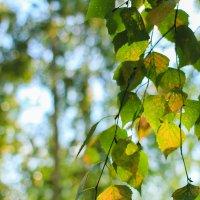 Осенняя зелень :: Ksenya Morozik