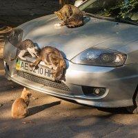 Горячие кошки :: Юрий Муханов