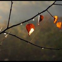 Осенний изыск :: Алексей Дмитриев