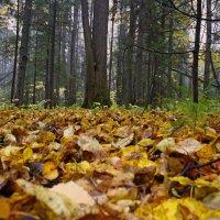 Листья жёлтые кружатся, на земь ковриком ложатся.... :: Любовь Чунарёва